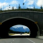 Трансканадская дорога №1