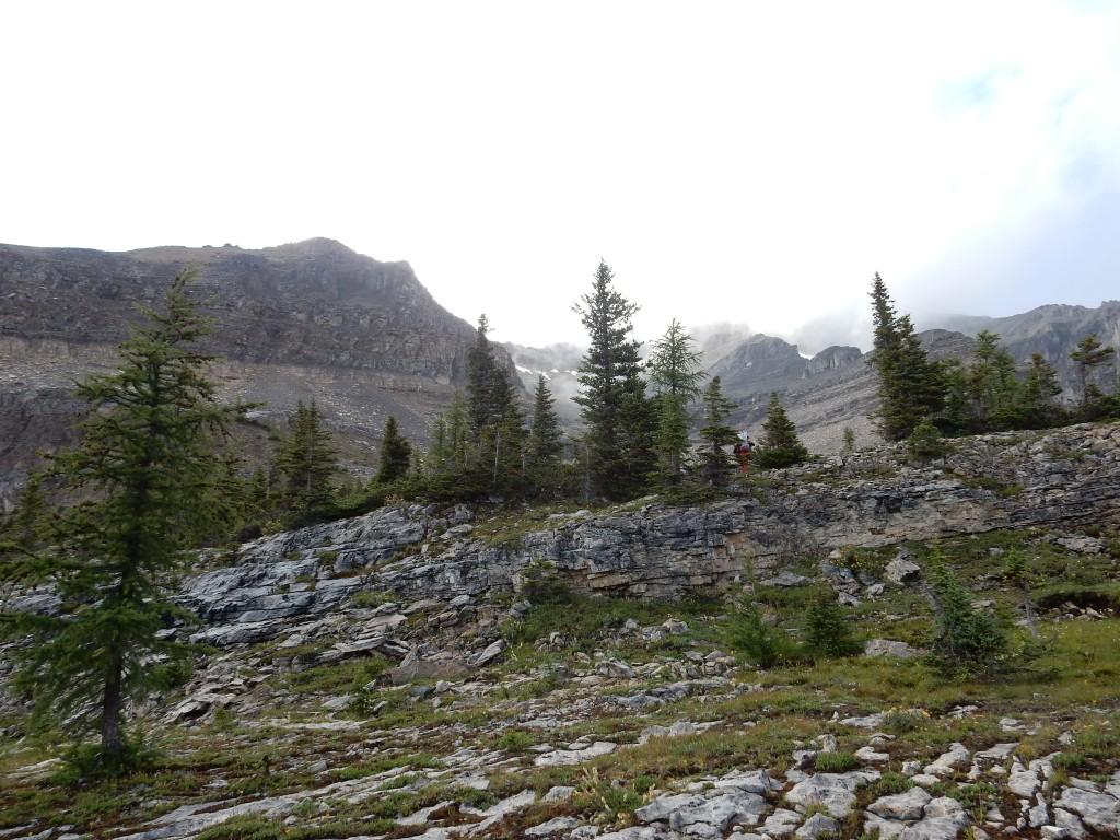 Верхняя граница леса в районе бывшей хижины Фэй.